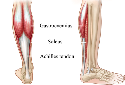 Learning about the soleus muscle in the calf the hard way and some ...